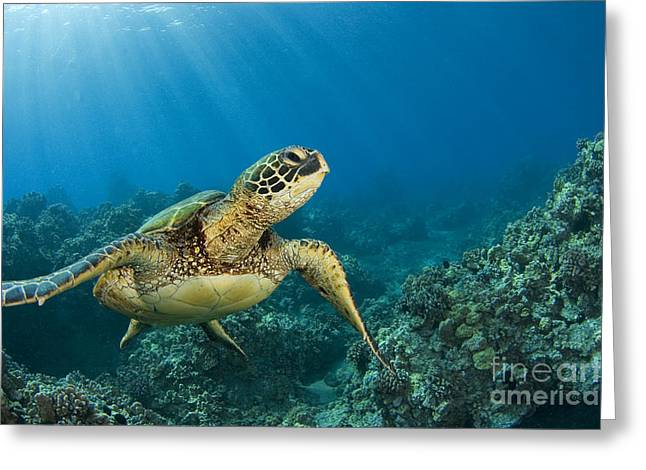 Animal Wisdom Greeting Cards - Green Sea Turtle Greeting Card by Dave Fleetham - Printscapes