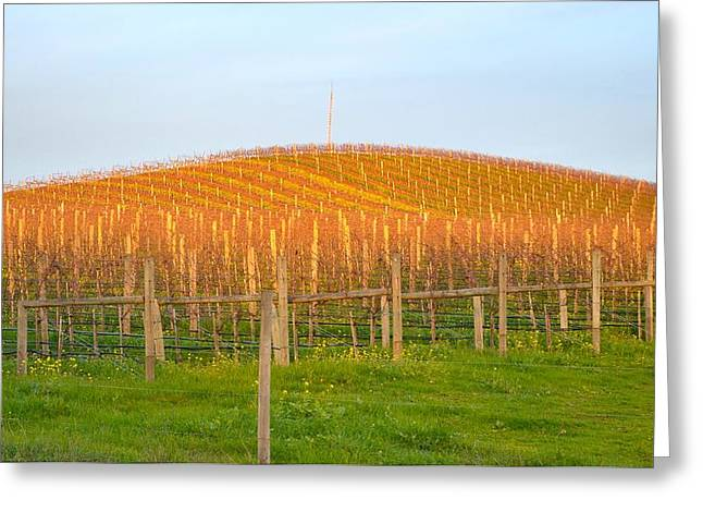 Beautiful Wine Grape Print Greeting Cards - Morning in The Vineyard Greeting Card by Maria Jansson