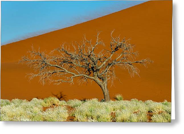 Bare Trees Greeting Cards - Sand Dune, Sossusvlei, Namib Desert Greeting Card by Panoramic Images