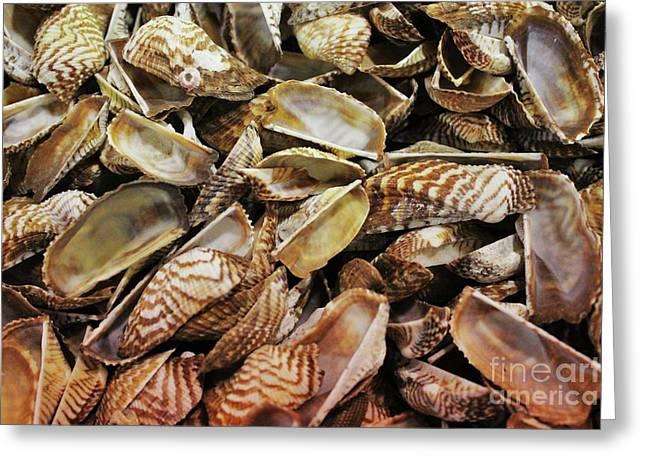 Sea Shells Greeting Card by Paulette Thomas