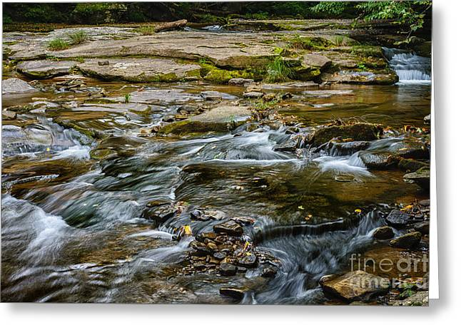 Stream Greeting Cards - Williams River Headwaters Greeting Card by Thomas R Fletcher