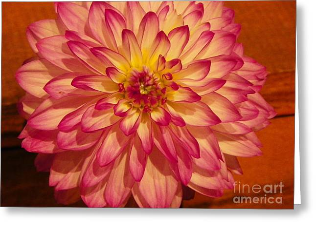 Nature Center Greeting Cards - #928 D855 Dahlia Close Up Greeting Card by Robin Lee Mccarthy Photography