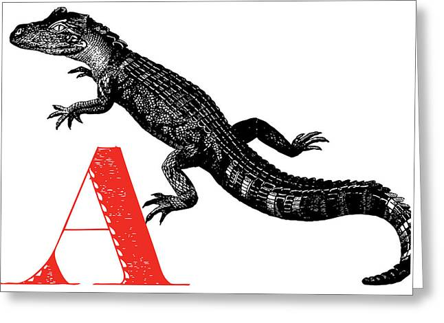 A Alligator Greeting Card by Thomas Paul