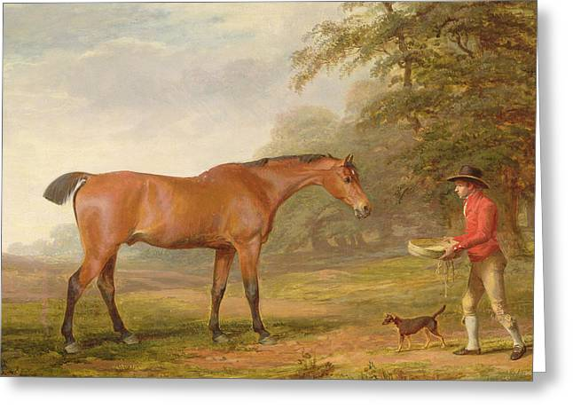 Green Pasture Greeting Cards - A Bay Horse Greeting Card by George Garrard