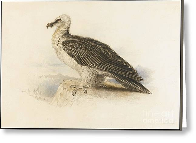 Edward Lear Greeting Cards - A Bearded Vulture Greeting Card by Celestial Images
