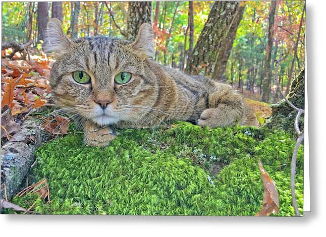 A Bed Of Moss Greeting Card by Susan Leggett