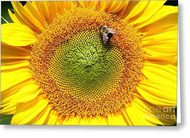 Print Photographs Greeting Cards - A Bees Life Greeting Card by Tina  LeCour