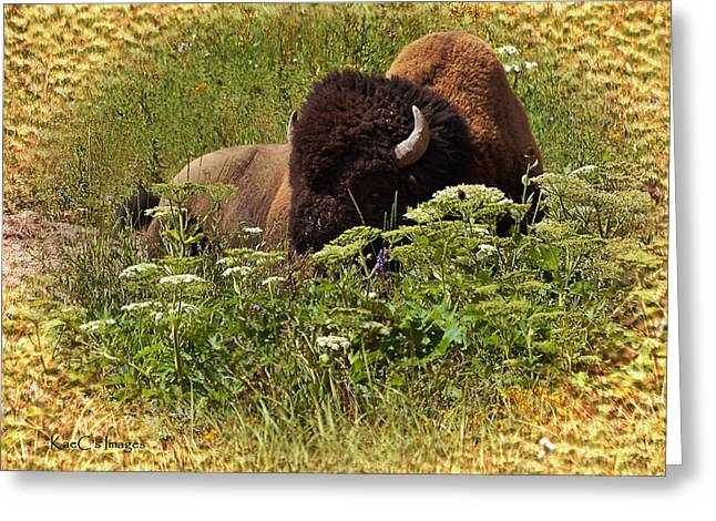 A Bison At Rest Greeting Card by Kae Cheatham