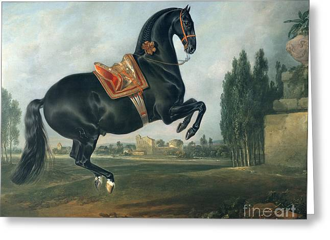 Healthy Greeting Cards - A black horse performing the Courbette Greeting Card by Johann Georg Hamilton