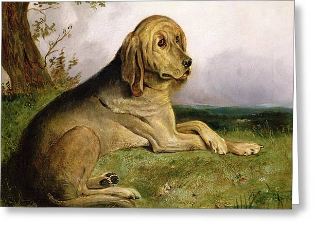 Blood Hound Greeting Cards - A Bloodhound in a Landscape Greeting Card by English school