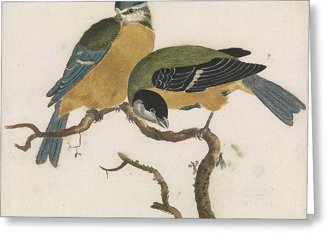 Anonymous Paintings Greeting Cards - A blue tit and great tit on a branch Greeting Card by Celestial Images