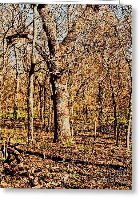 A Bottomland Pecan Greeting Card by Gary Richards