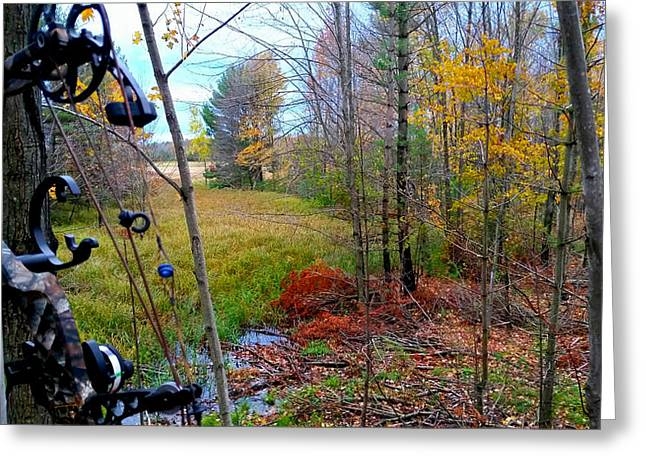Fall Trees Greeting Cards - A Bowhunters View Greeting Card by Brook Burling