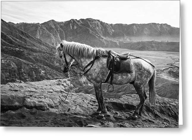 Spotted Horse Greeting Cards - A Break In The Mountains Greeting Card by Fancy Crave 1