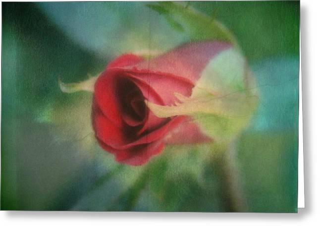 A Budding Romance Greeting Card by Kathy Bucari