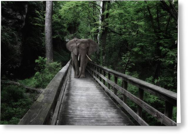 Ivory Art Greeting Cards - A Bull on the Boardwalk Greeting Card by Tom Mc Nemar