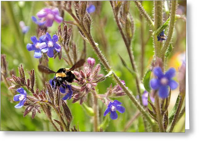 Bee In Flight Greeting Cards - A bumble in the flowers   Greeting Card by Jeff  Swan