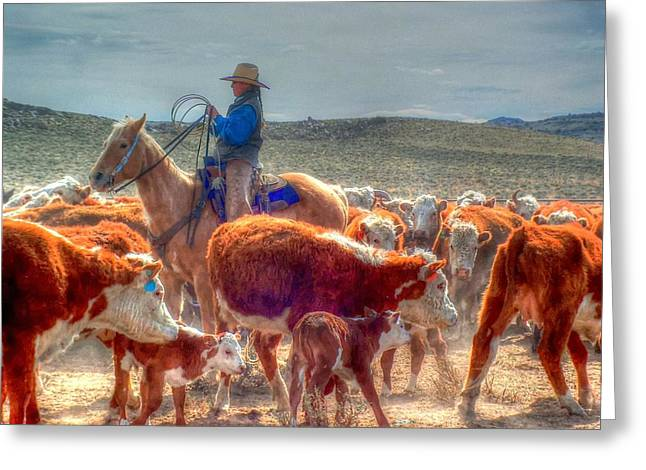 Roping Horse Greeting Cards - A Burst of Sunlight Greeting Card by Vikki Correll