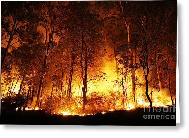 A Bushfire Burning Orange And Red At Night. Greeting Card by Caio Caldas