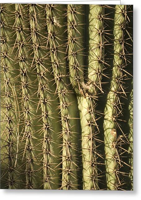 Desert Dome Greeting Cards - A Cactus From The Omaha Zoos Desert Greeting Card by Joel Sartore