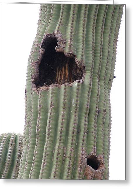 Arizonia Greeting Cards - A Cactus Nest Greeting Card by Vickie Roche