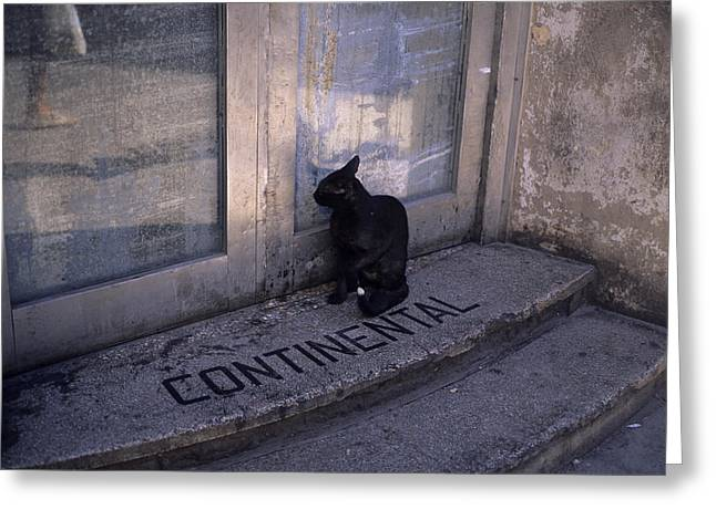 A Cat Looks In A Doorway In Old Havana Greeting Card by Taylor S. Kennedy