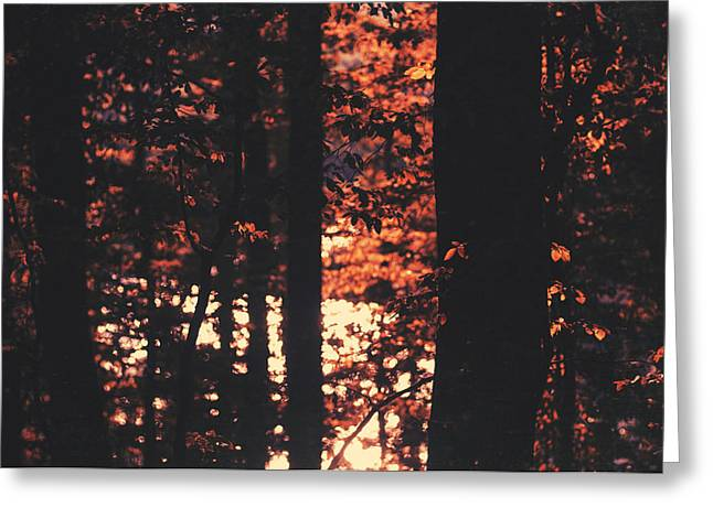 Photos Of Autumn Greeting Cards - A cause de lautomne Greeting Card by Taylan Soyturk