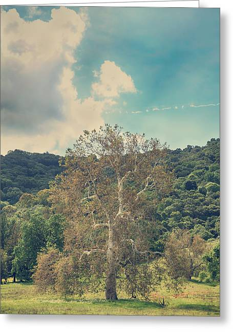 Sycamore Greeting Cards - A Certain State of Being Greeting Card by Laurie Search