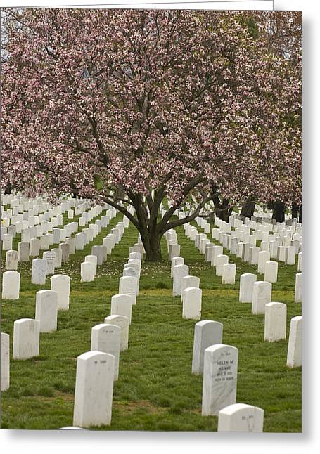 Place Of Burial Greeting Cards - A Cherry Tree Blooms In Arlington Greeting Card by Greg Dale