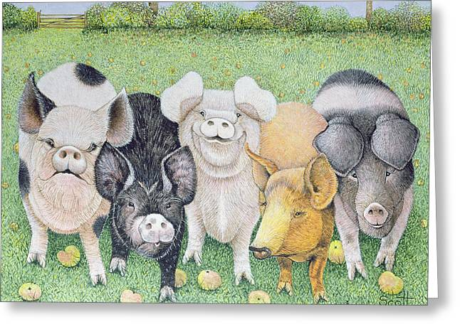 Piglets Greeting Cards - A Chorus Line Greeting Card by Pat Scott