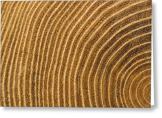 Forests And Forestry Greeting Cards - A Close View Of Tree Rings Greeting Card by Taylor S. Kennedy