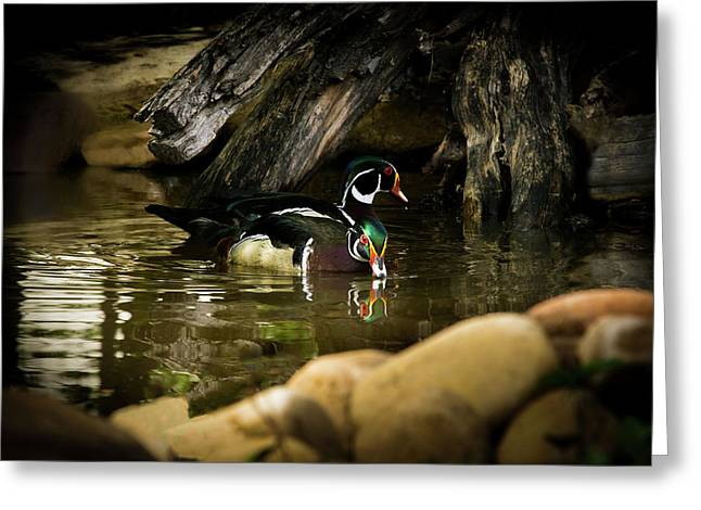A Cold Drink - Wood Ducks Greeting Card by TL Mair