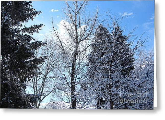 Wintry Greeting Cards - A Cold Winter Day Greeting Card by Jari Hawk