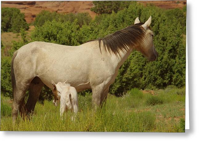 Living Things Greeting Cards - A colt and mare Greeting Card by Jeff  Swan