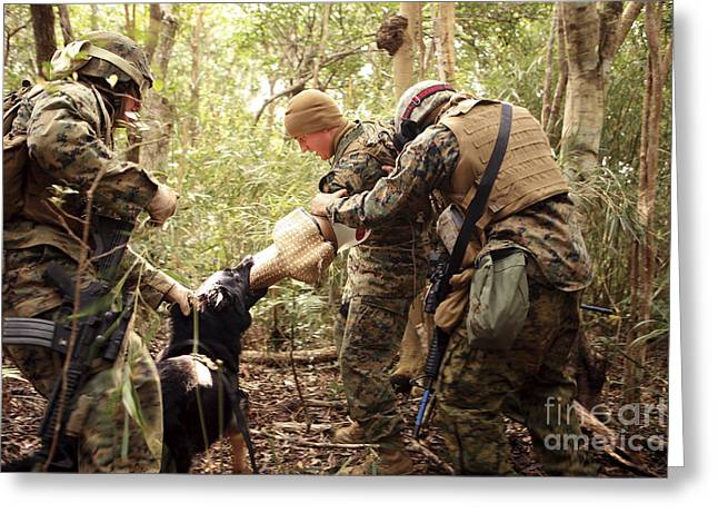Dog Handler Greeting Cards - A Combat Tracking Dog Subdues A Mock Greeting Card by Stocktrek Images