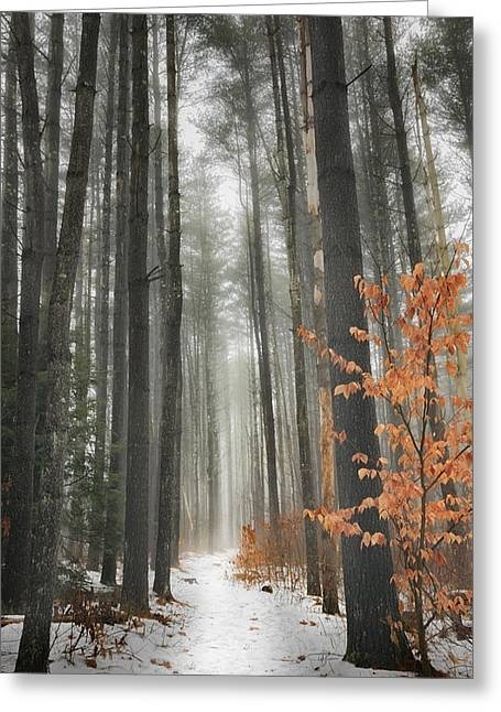 Southern New England Greeting Cards - A Connecticut Winter Path Greeting Card by Bill Wakeley