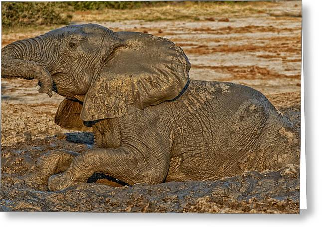 Cooling Off Greeting Cards - A Cooling Botswana Mud Bath Greeting Card by H Bieser