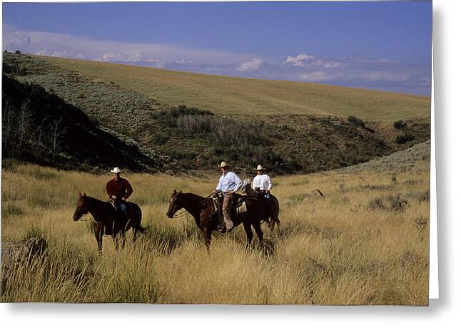 Steamboat Springs Western Greeting Cards - A Cowboy And Friends Herd Cattle Greeting Card by Taylor S. Kennedy