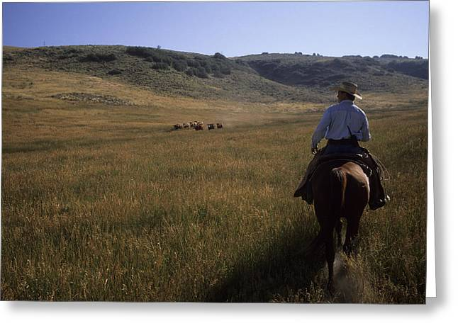 Steamboat Springs Western Greeting Cards - A Cowboy Herds Cattle On His Ranch Greeting Card by Taylor S. Kennedy