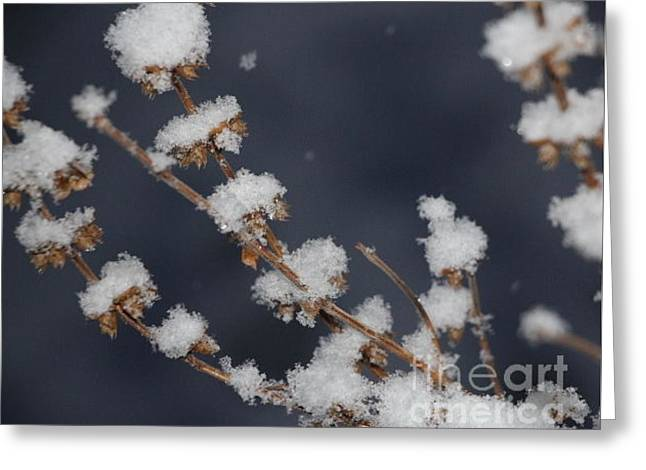 Wintry Greeting Cards - A Crystal Snow Greeting Card by Jari Hawk
