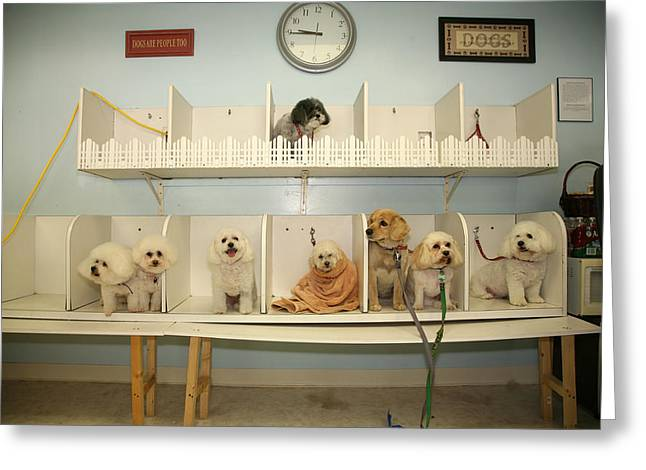 Isolated On Black Background Greeting Cards - A day at the Doggie Day Spa Greeting Card by Michael Ledray
