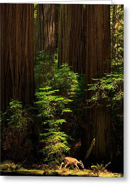 Out Of The Woods Greeting Cards - A Deer In The Redwoods Greeting Card by James Eddy