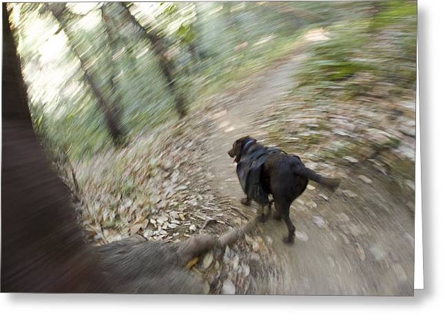 Big Sur California Greeting Cards - A Dog Backpacking On Pine Ridge Trail Greeting Card by Rich Reid
