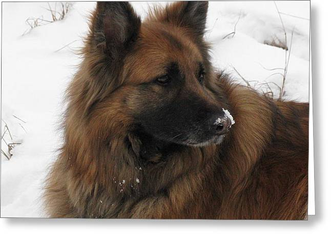 Meadow Greeting Cards - A dog in the snow Greeting Card by Samantha Mattiello