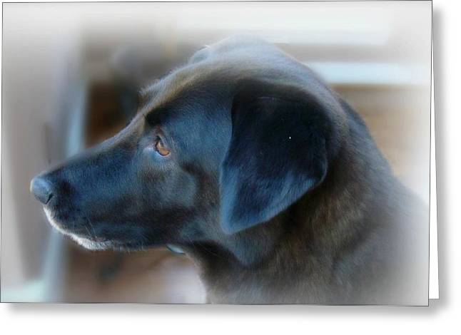 Black Fur Greeting Cards - A Dog Must Have A Secret Place Greeting Card by Kathy Bucari