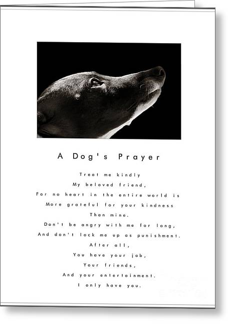 Greyhound Dog Greeting Cards - A Dogs Prayer - White Greeting Card by Angela Rath