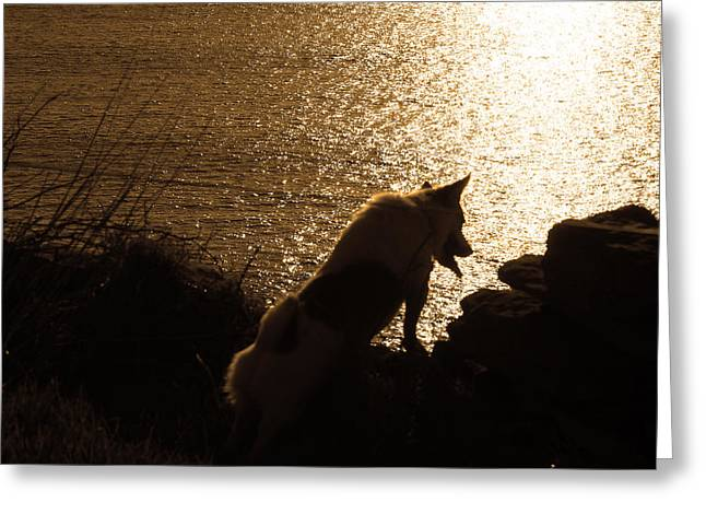 Sunset At The Beach Greeting Cards - A Dogs View Greeting Card by Aidan Moran