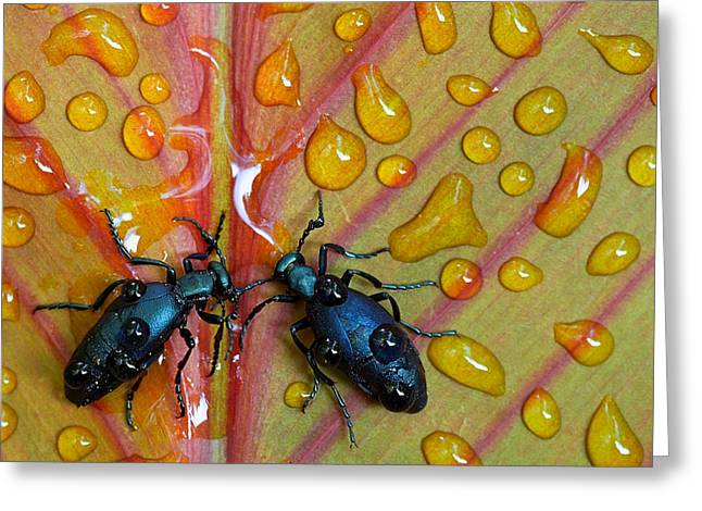 Insect Greeting Cards - A Drink For Two Greeting Card by Stephen Clough
