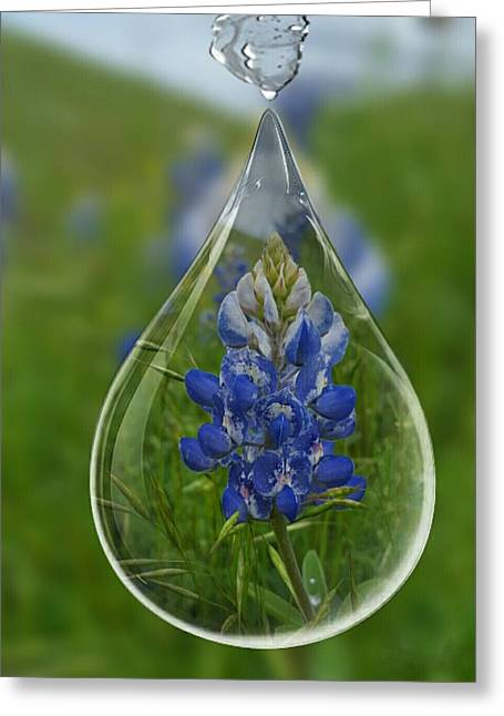 A Drop Of Texas Blue Greeting Card by ARTography by Pamela Smale Williams