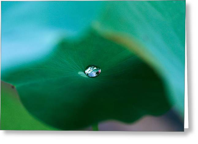 Lotus Leaves Greeting Cards - A Drop Of Water 03 Greeting Card by Kam Chuen Dung